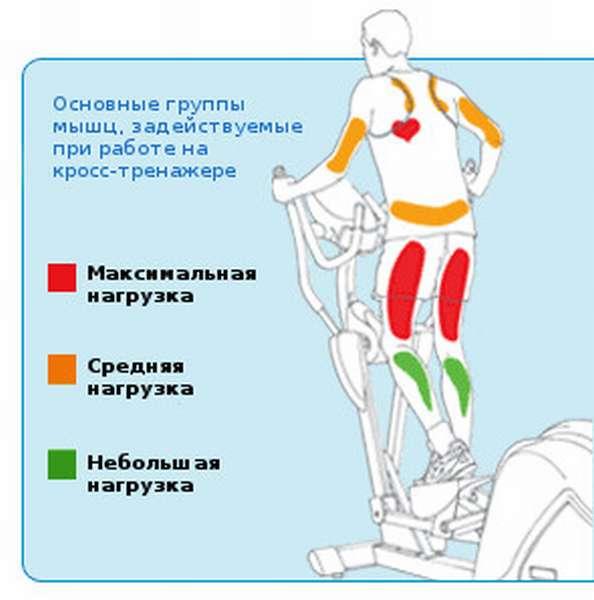 тренажер эллипс какие мышцы работают фото этого большого количества
